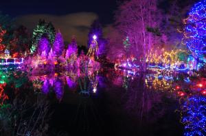 Christmas Reflections 2 at Van Deusen Gardens 2012-12-30 - Colin M Stevens