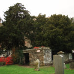 Ancient yew tree at Fortingall Churchyard Scotland. Photo by CMS