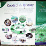 Display label for ancient yew tree in Fortingall Churchyard. Photo by CMS