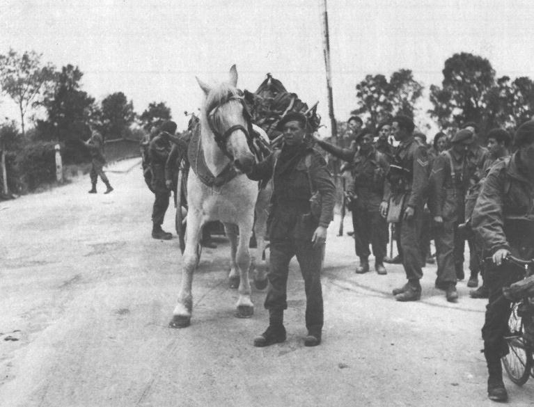BSA_Commando_1 Bde_France_horse (2)