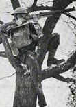 DETAIL - Sniper Brit in tree 1940-04-01 © IWM (Art. IWM PST 15656)