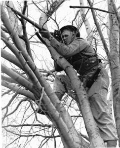 Canadian sniper in a tree