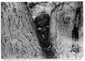 "British snioper with facemask peering out from between ""V"" of tree trunks."