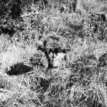 Dummy head as a decoy for enemy snipers.