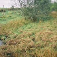 000007-R1-045-053 Culloden Battlefield (1)